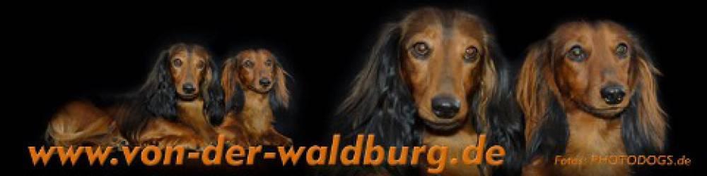 """""""von der Waldburg Remagen FCI"""""""